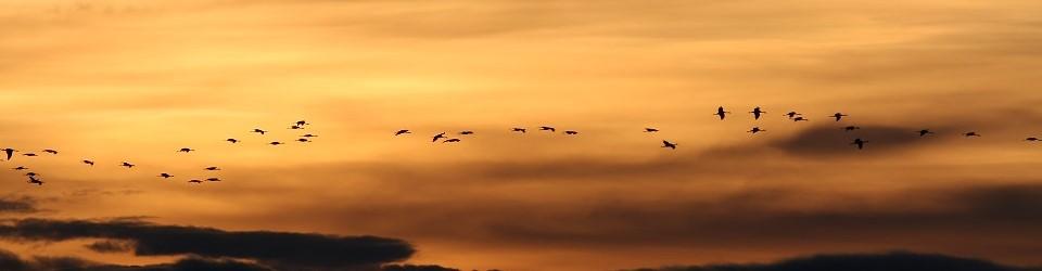 que-hacer-observacion-de-aves-sierra-de-albarracin-teruel
