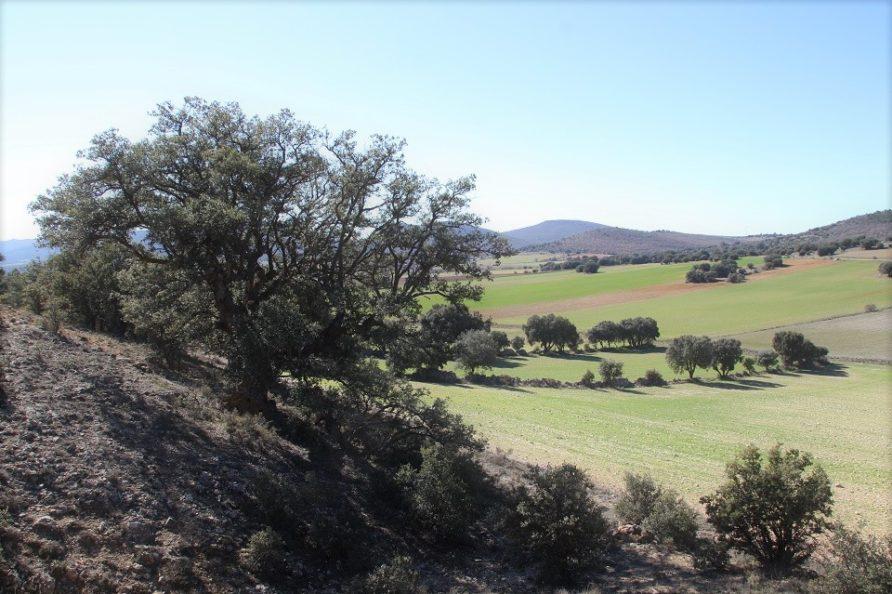 ruta carrascas centenarias El Pedregal