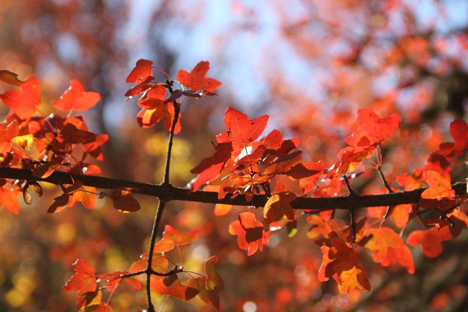 otoño_sierra_albarracin